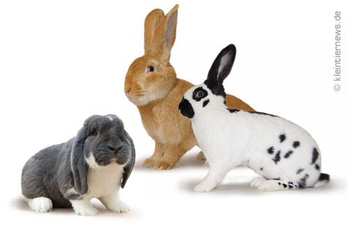 Große Kaninchenrassen