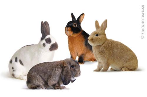 Kleine Kaninchenrassen