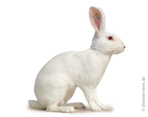 gestatten hase he und widder seite 60 kaninchen. Black Bedroom Furniture Sets. Home Design Ideas
