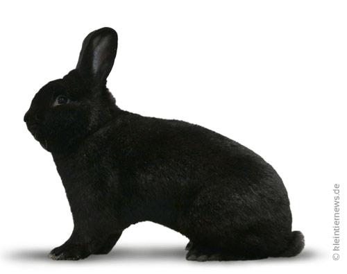 Schwarze Wiener