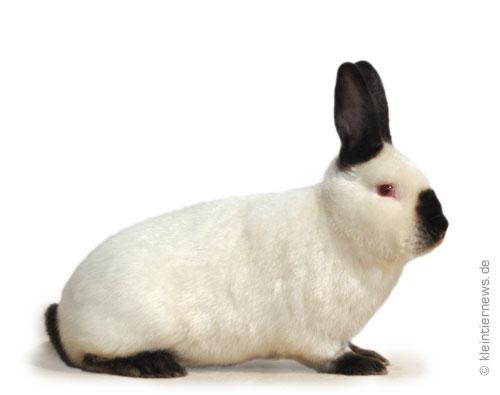Satin-Kalifornier schwarz-weiß