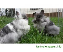 Werner/Angie